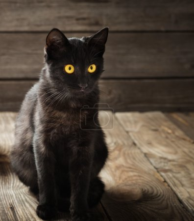 black cat on wooden background
