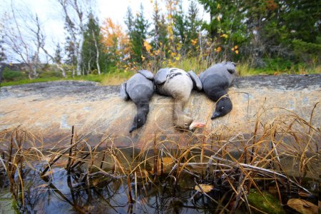 Trophies Northern hunting geese