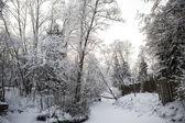 Skandinávské zimy lesa na břehu řeky ve sněhu na slunce mrazivý den