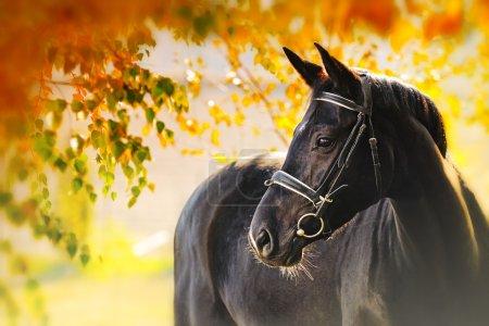 Portrait of black horse in autumn