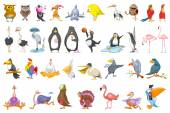 Vector set of various birds illustrations