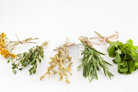 Healing herbs bunches on white. Herbal medicine.