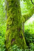 Old tree with moss in forest