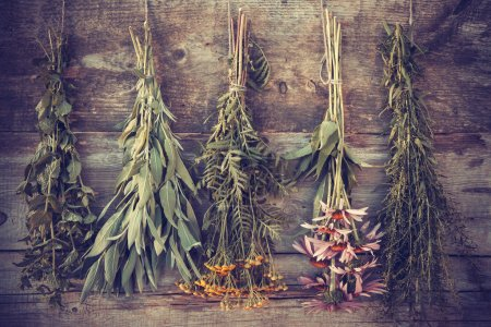 Vintage stylized photo of bunches of healing herbs on wooden wal