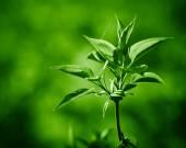 Jarní větvičky čerstvých zelených listů. Jarní koncept