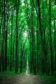 beautiful green forest with sunlight