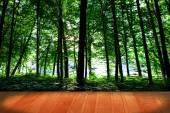 Forest with wooden floor