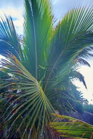 Palm's levaves close up