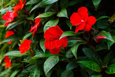 Red flowers in the middle of green leaves