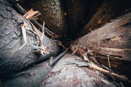 Photo pour Vue de l'intérieur de l'entrepôt de grumes - dommages à l'écorce sur les troncs d'arbres - abattage - image libre de droit