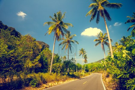 Asfalt road with palm trees