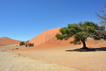Sossusvlei Namibia Africa