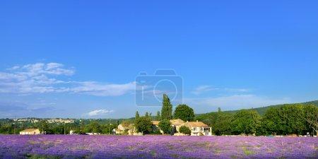 Photo pour Superbe paysage avec champ de lavande et ancienne ferme sous la lumière chaude du soir. Plateau de Sault, Provence, France - image libre de droit