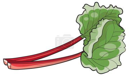 Fresh Rhubarb leaves