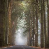 Fog on forest road