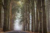 Beautiful mystery road
