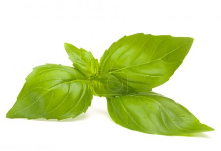 Photo for Sweet basil leaves isolated on white background - Royalty Free Image