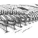 Vineyard landscape ink pen picture - vector...