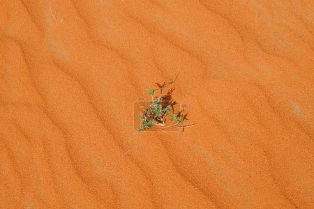 Green plant on red sand