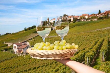 Vineyards of Lavaux region
