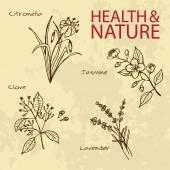 Handdrawn Illustration - Health and Nature Set Natural Supplements Lavender Citronella Jasmine and Clove