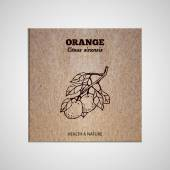 Herbs and Spices Collection - Orange tree  Hand-sketched herbal element on cardboard background Suitable for ads signboards packaging and identity designs