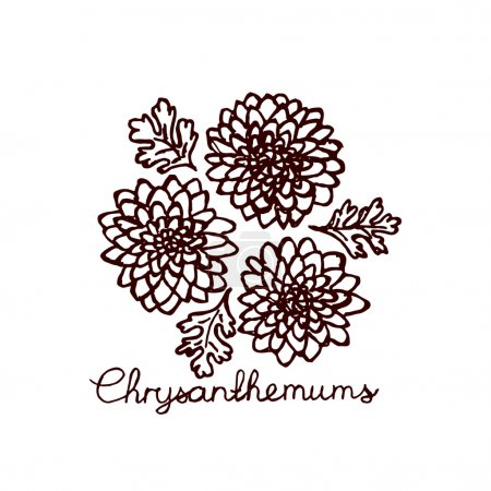 Illustration for Handsketched bouquet of chrysanthemums.  Floral label.  Suitable for ads, signboards, identity and wedding designs - Royalty Free Image