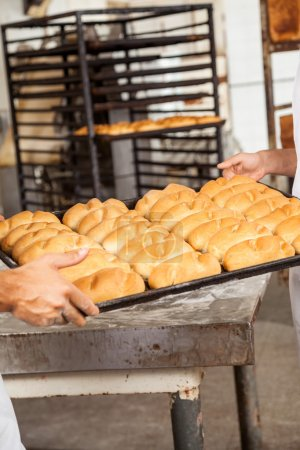 Bakers Hands Carrying Breads In Baking Tray