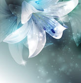 Shining flowers composition vector illlustration