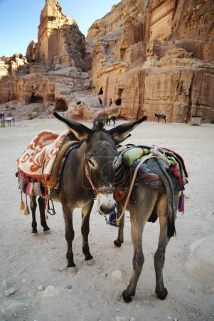 Donkeies in town of Petra