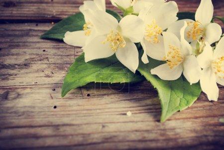 Jasmine flower on rustic wooden table. retro filte...