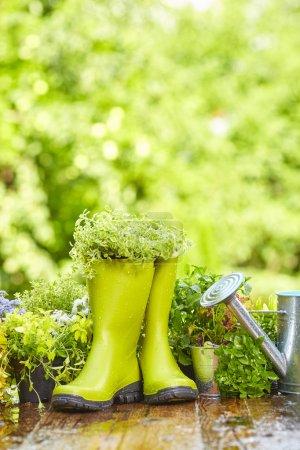 Photo pour Outils de jardinage en plein air sur une vieille table en bois - image libre de droit