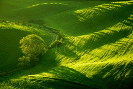 Beautiful green hills in Tuscany