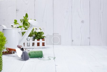 Photo for Plants and gardening tools on old white wood table - Royalty Free Image