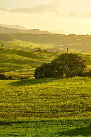 Photo for Tuscany hills. Italy. May - Royalty Free Image