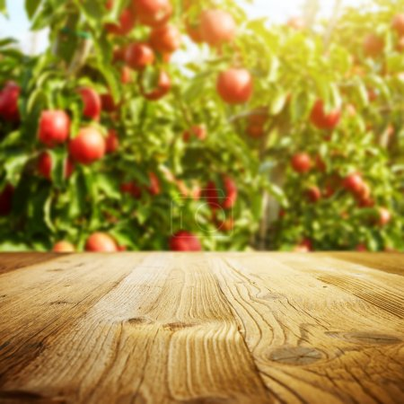 Foto de Espacio y la manzana de mesa jardín de árboles y frutas - Imagen libre de derechos