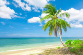 beach with coconut palm