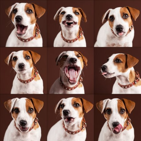 Emotional dog collage