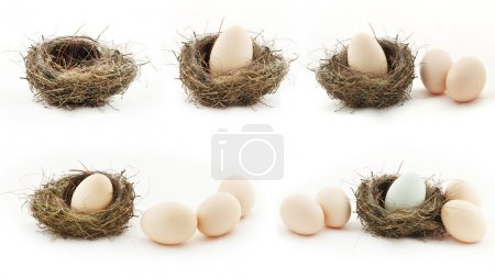 Composition with empty nest and big eggs inside the small nests,