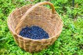 Blueberries are perennial flowering plants