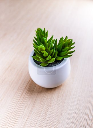 Crassula is a large genus of succulent plants containing many species, including the popular jade plant, Crassula ovata.