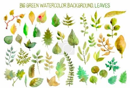 Illustration pour Aquarelle feuilles collection pour un design différent - image libre de droit