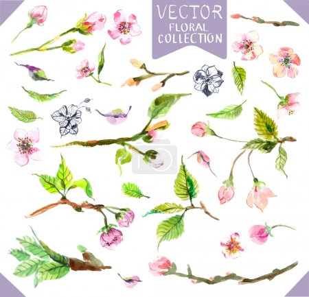 Illustration for Watercolor apple flowers, beautiful collection for design - Royalty Free Image
