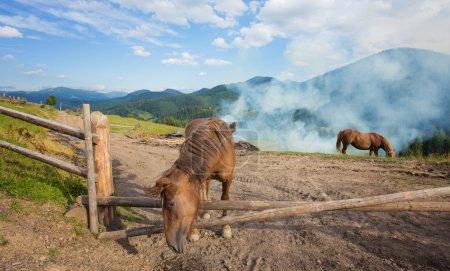 Horses, feeding on grass at high-land pasture at C...