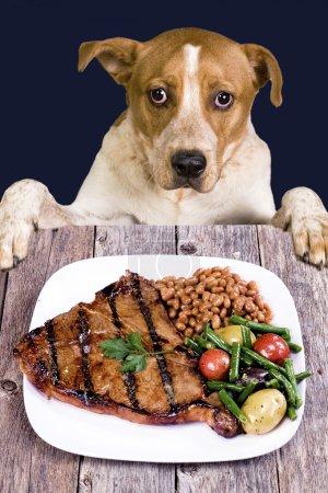 Photo pour Chien regardant un bon steak . - image libre de droit