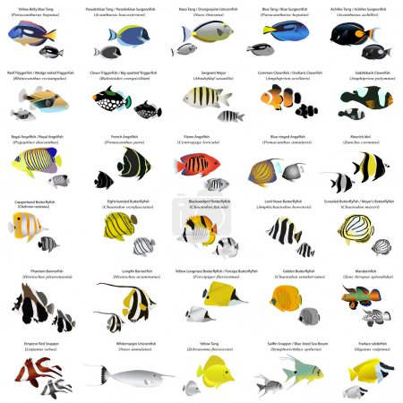 Illustration for Collection of different species of marine fish - Royalty Free Image