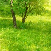 A piece of green urban park