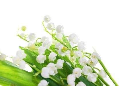 Photo pour Blanc fleurs de Lys de la vallée isolée sur fond blanc - image libre de droit