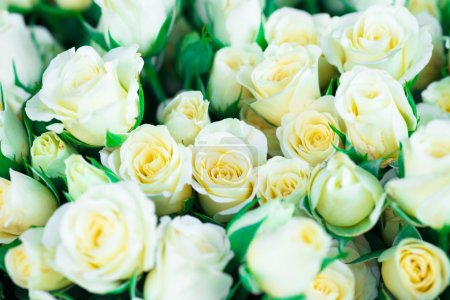 White roses with green leaves