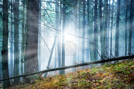 Mysterious fog in green forest